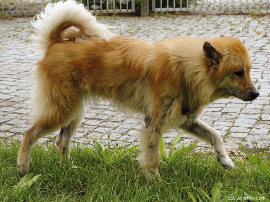 Fuchsräude Bei Hunden